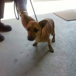 Found dog on 08 Sep 2014 in Bohemeenhan Bog. .ref 398....Terrier X...found on Bohemeenhan Bog...contact Meath pound if you have any info...thanks..