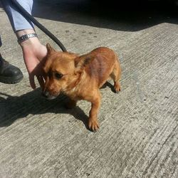 Found dog on 08 Sep 2014 in Bohermehan Bog. found .ref 397....Terrier X found on Bohermehan Bog....contact Meath Pound if you can help...