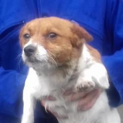 Found dog on 08 Sep 2017 in Old Castle , Clondalkin. found, now in the dublin dog pound.. Date Found:
