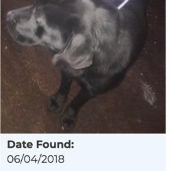 Reunited dog 09 Apr 2018 in Clondalkin. UPDATE REUNITED....found, now in the dublin dog pound...Date Found: 06/04/2018 Location Found: Clondalkin