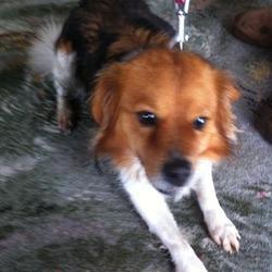 Dog Training Celbridge