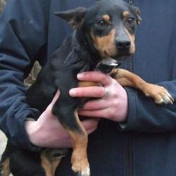 Found dog on 09 Feb 2015 in tallaght. found,now in the dublin dog pound.. Date Found: Friday, February 6, 2015 Location Found: Glenshane Crescent , Tallaght