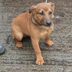 Found dog on 09 Feb 2016 in Sundale Close , Tallaght. found, now in the dublin dog pound... Date Found: Monday, February 8, 2016 Location Found: Sundale Close , Tallaght