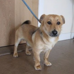 Found dog on 09 Jun 2017 in Aghavannagh. FOUND...s a male crossbreed found in the Aghavannagh area. For further information please contact Wicklow Dog Pound at 040444873