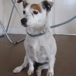 Reunited dog 09 Jun 2017 in Wicklow town. UPDATE...REUNITED...FOUND... is a female terrier type found in Wicklow town. For further information contact Wicklow Dog Pound at 040444873.