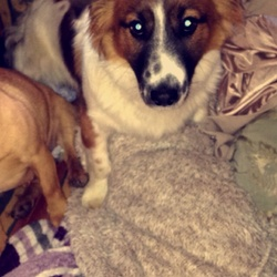 Found dog on 09 Mar 2015 in Navan Co.Meath. *FOUND NAVAN MEATH*