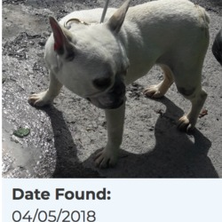 Found dog on 09 May 2018 in Clondalkin Village. found, now in the dublin dog pound...Date Found: