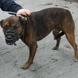 Found dog on 09 Oct 2016 in Drysdale Close , Tallaght. found, now in the dublin dog pound.... Date Found: Monday, October 3, 2016 Location Found: Drysdale Close , Tallaght