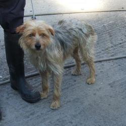Found dog on 09 Sep 2015 in Alderwood , Springfield. found,now in the dublin dog pound.. Date Found: Tuesday, September 8, 2015 Location Found: Alderwood , Springfield