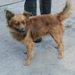 Found dog on 09 Sep 2015 in vILLAGE , Clondalkin . found, now in the dublin dog pound.. Date Found: Tuesday, September 8, 2015 Location Found: vILLAGE , Clondalkin