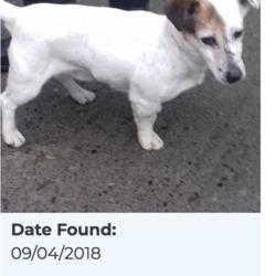 Found dog on 10 Apr 2018 in Ballymana Lane. found, now in the dublin dog pound...Date Found: 09/04/2018 Location Found: Ballymana Lane