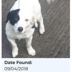 Reunited dog 10 Apr 2018 in Corkagh Park. UPDATE REUNITED....found, now in the dublin dog pound...Date Found: 09/04/2018 Location Found: Corkagh Park