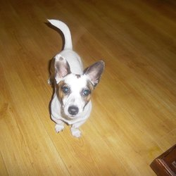 Found dog on 10 Feb 2015 in bettystown. found male 10mt old Jrt...found on on Bettystown Beach....ref 78....contact Meath pound...on 087 0676766...