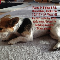 Found dog on 10 Nov 2013 in Clondalkin, Dublin. This dog was hit by a car 10/11/13 Belgard Rd, Clondalkin, Dublin. We took her and in and had her checked by vets. Female no tag or chip. Urgently need to find owner.