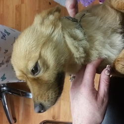 Reunited dog 10 Nov 2017 in Ballybrack Co. Dublin . Found 10 November in Ballybrack Co. Dublin. Beautiful dog someone must be missing