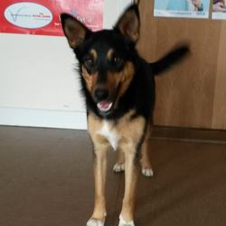 Found dog on 10 Oct 2016 in Tinahely.. found..is a female crossbreed who was found in Tinahely. Contact Wicklow Dog Pound for information on 040444873.
