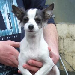Found dog on 10 Sep 2015 in  Tymno North Grove , Tallaght. found, now in the dublin dog pound.. Date Found: Wednesday, September 9, 2015 Location Found: Tymno North Grove , Tallaght