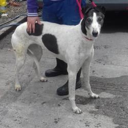 Found dog on 11 Apr 2017 in St Patricks Cottages , Rathfarnham. found, now in the dublin dog pound.. Date Found: Monday, April 10, 2017 Location Found: St Patricks Cottages , Rathfarnham