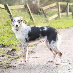 Found dog on 11 Dec 2014 in dublin. found brown husky dog , now in the dublin dog pound...