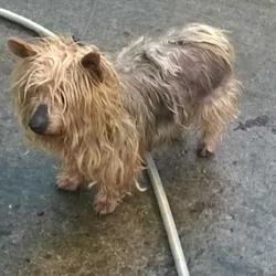 Found dog on 11 Feb 2016 in Village , Palmerstown. found, now in the dublin dog pound.. Date Found: Wednesday, February 10, 2016 Location Found: Village , Palmerstown