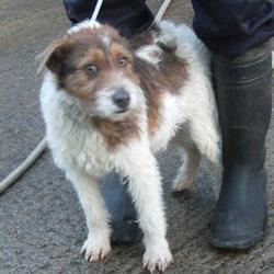 Found dog on 11 Jan 2016 in Sundale Estate , Tallaght. found, now in the dublin dog pound.. Date Found: Friday, January 8, 2016 Location Found: Sundale Estate , Tallaght