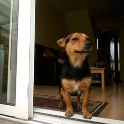 Found dog on 11 Jul 2015 in Coolock . Jackrussel cross, friendly,obedient,smart, playful and well trained.Found in coolock  call me 0858181225