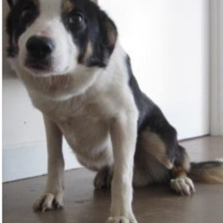 Found dog on 11 May 2018 in Glen of Imaal . found... male Collie found in the Glen of Imaal area. Please contact Wicklow Dog Pound for further information at 0404-44873