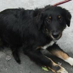 Found dog on 11 Oct 2016 in Lisheen Road , Brittas... found, now in the dublin dog pound.. Date Found: Monday, October 10, 2016 Location Found: Lisheen Road , Brittas