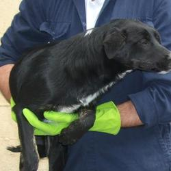 Found dog on 11 Oct 2016 in Lisheen Road , Brittas. found, now in the dublin dog pound.. Date Found: Monday, October 10, 2016 Location Found: Lisheen Road , Brittas