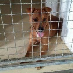 Found dog on 11 Oct 2016 in Watergate Street..Navan. found...2yr Terrier x..ref 383...found on Watergate Street..Navan...contact Meath pound on 087 0676766...thanks