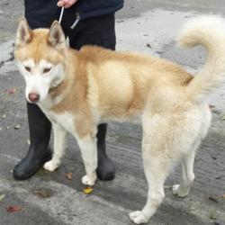 Dog looking for home 11 Oct 2017 in Ashwood Est , Clondalkin. UPDATE OWNER IS HOMELESS SO HE NOW NEEDS A NEW HOME,....found, now in the dublin dog pound... Date Found: