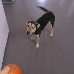Found dog on 11 Sep 2014 in kells. found .ref 403...Female Collie X...approx. 1 to 2 yrs old....found in Ballybeg, Kells...contact Meath pound if you have any information