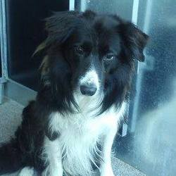 Found dog on 11 Sep 2014 in kilcloon. found collie,Found in Pagestown...Kilcloon...no collar...contact Meath Pound...