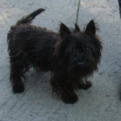 Found dog on 11 Sep 2014 in tallaght. found black terrier now in dublin dog pound... Date Found: Wednesday, September 10, 2014 Location Found: Kiltalown , Tallaght