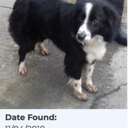 Found dog on 12 Apr 2018 in Bohernabreena. found, now in the dublin dog pound...Date Found: 11/04/2018 Location Found: Bohernabreena