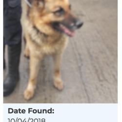 Found dog on 12 Apr 2018 in Wheatfield. found,now in the dublin dog pound....Date Found: 10/04/2018 Location Found: Wheatfield