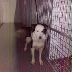 Found dog on 12 Dec 2014 in navan. found male ..3yr old Male Collie ...found in Donegal Rd, Kilberry, Navan....ref 579...contact Meath Pound.