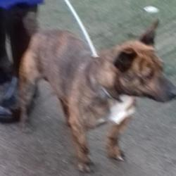Reunited dog 12 Dec 2017 in Luas Station , Red Cow. UPDATE REUNITED....found, now in the dublin dog pound... Date Found: