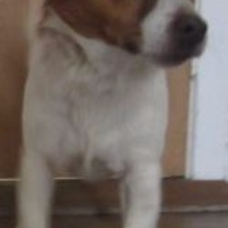 Reunited dog 12 Dec 2017 in wicklow. UPDATE REUNITED....found...is a male terrier crossbreed found in Wicklow. Please contact Wicklow Dog Pound at 0404 44873 for further information.
