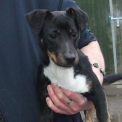 Found dog on 12 Feb 2015 in Ballycragh Tallaght. found terrier, now in the dublin dog pound.. Date Found: Wednesday, February 11, 2015 Location Found: Allenton , Ballycragh Tallaght