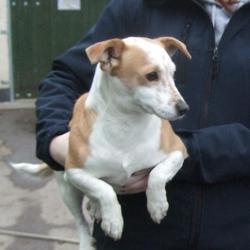 Found dog on 12 Feb 2015 in Donomore , Tallaght. found terrier, now in the dublin dog pound.. Date Found: Wednesday, February 11, 2015 Location Found: Donomore , Tallaght