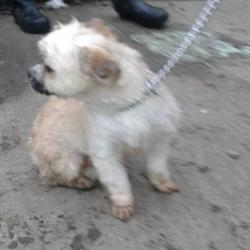 Found dog on 12 Feb 2015 in Knocklyon , D,16. found dog now in the dublin dog pound.. Date Found: Wednesday, February 11, 2015 Location Found: Knocklyon , D,16