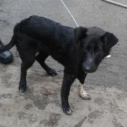 Found dog on 12 Feb 2015 in Village , Clondalkin. found dog now in the dublin dog pound.. Date Found: Wednesday, February 11, 2015 Location Found: Village , Clondalkin