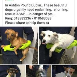 Found dog on 12 Feb 2018 in dublin... found, now in the dublin dog pound..