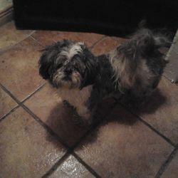 Found dog on 12 Jan 2014 in Limerick City. Female grey/white found in Limerick City on 12th January 2014