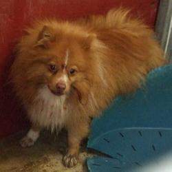 Found dog on 12 Jan 2017 in Carrigmore , Saggart. found, now in the dublin dog pound... Date Found: