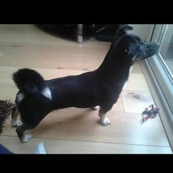 Found dog on 12 Jun 2014 in Clondalkin. Jack Russell Terrier X found near the Neilstown shops, Clondalkin.  With finder 085 1548259