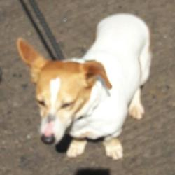 Found dog on 12 May 2017 in Village , Clondalkin. found, now in the dublin dog pound... Date Found: Monday, May 8, 2017 Location Found: Village , Clondalkin
