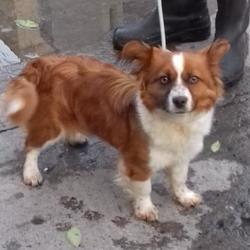 Found dog on 12 Nov 2017 in Tallaght , Village. found, now in the dublin dog pound... Date Found: