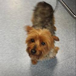 Found dog on 12 Sep 2014 in culmullin.  found between the M3 and Culmullin. Please contact last hope charity 0857172024